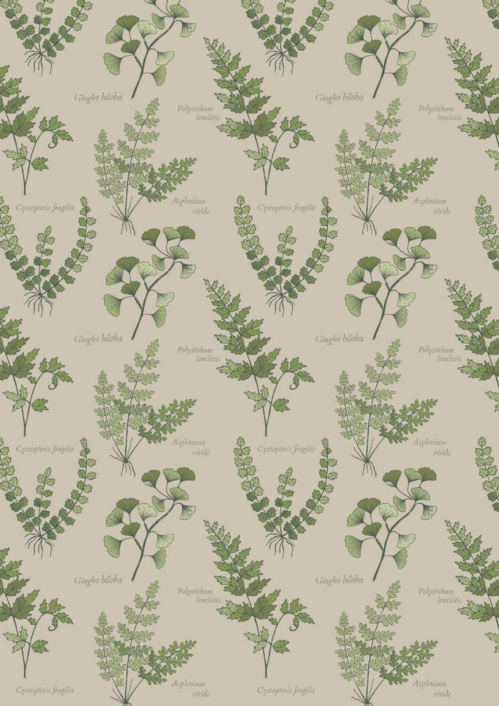 A121.2 - Natural ferns & leaves